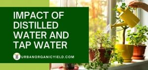 impact of distilled water and tap water