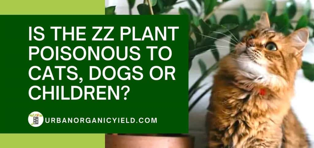 the zz plant poisonous to cats dogs children