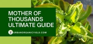 the ultimate guide of mother of thousands