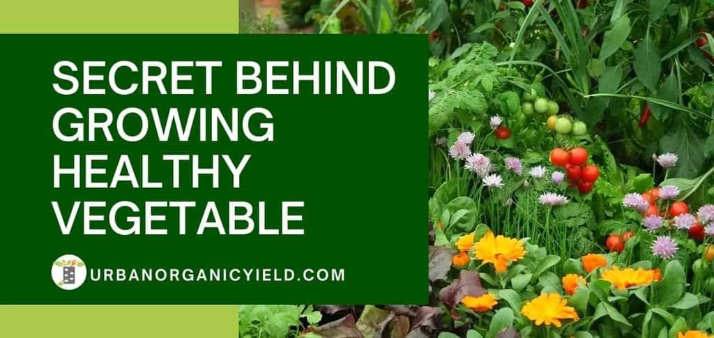 Secret Behind Growing Healthy Vegetable