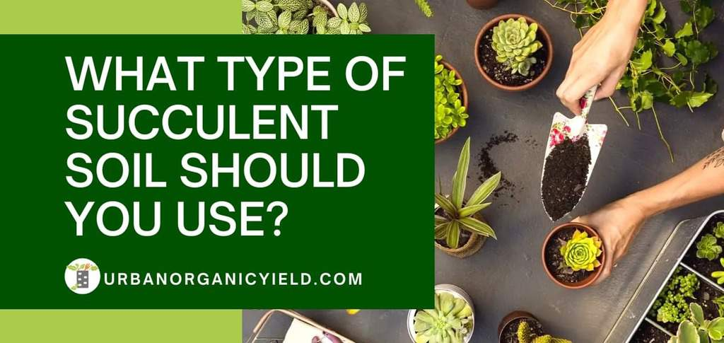 type of succulent soil you should use