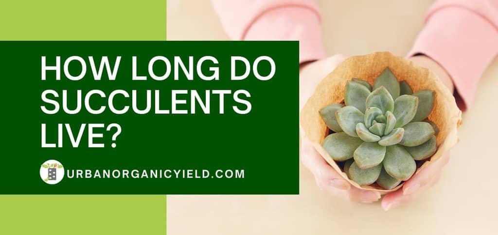 how long do succulents live