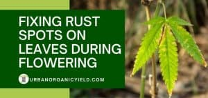 Fix Rust Spots On Leaves During Flowering