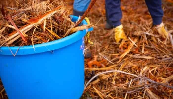 shredded cedar mulch gathering in a blue bucket