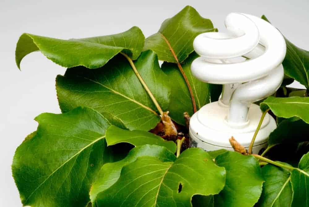 fluorescent light in plants