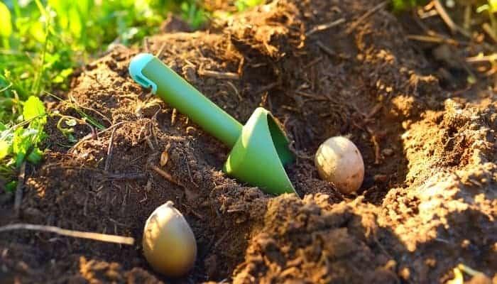 how far apart you should plant potatoes
