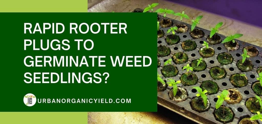 use rapid rooter plugs to germinate weed seedlings