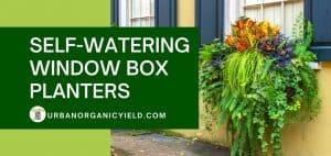 self-watering window box plants sitting on the window