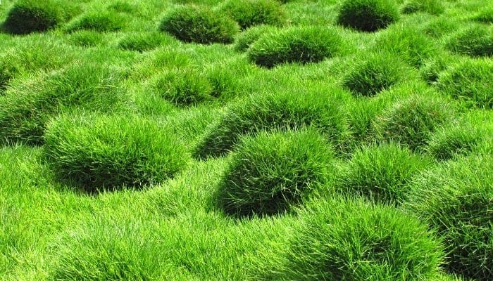 how long does it take for grass to grow