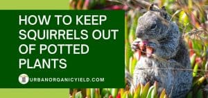 how to keep squirrels out of potted plants in many ways