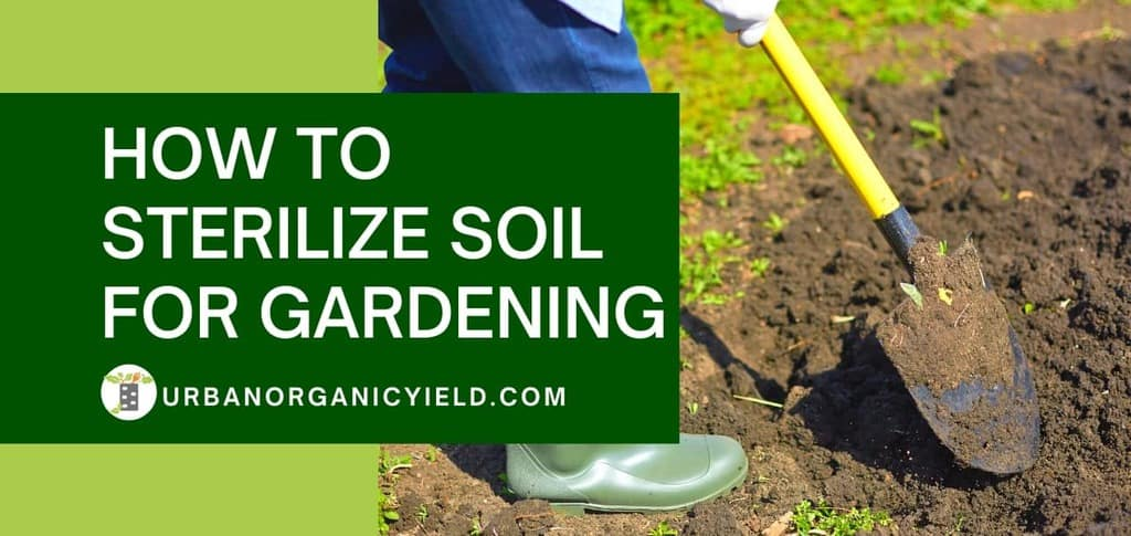 how to sterilize soil with several methods