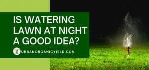 watering lawn at night