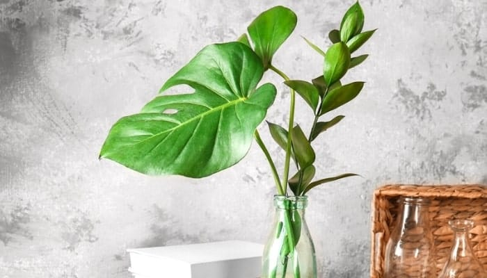 leaf philodendron resting on the table