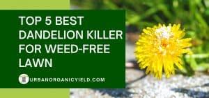 best dandelion killer for weed-free lawn