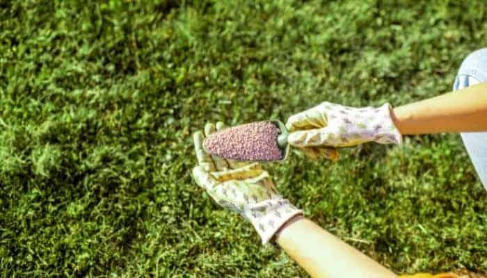 fertilize-warm-season-grasses