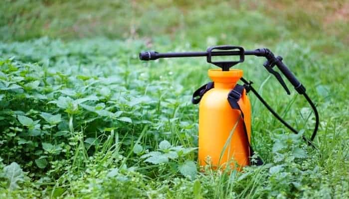 pump-weed-killer-sprayers-on-the-lawn