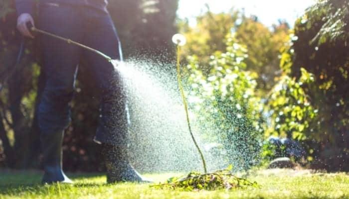 seasonal lawn care using weed control