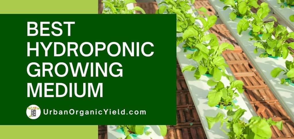 Best-Hydroponic-Growing-Medium