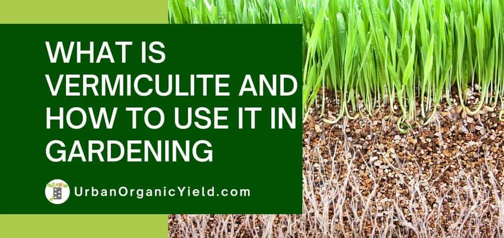 What-Is-Vermiculite-And-How-To-Use-It-In-Gardening