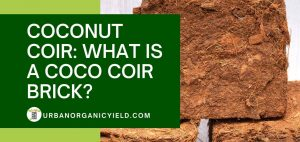 what is coco bricks