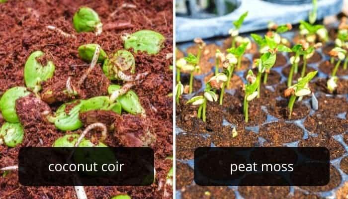 coconut-vs.-peat-moss