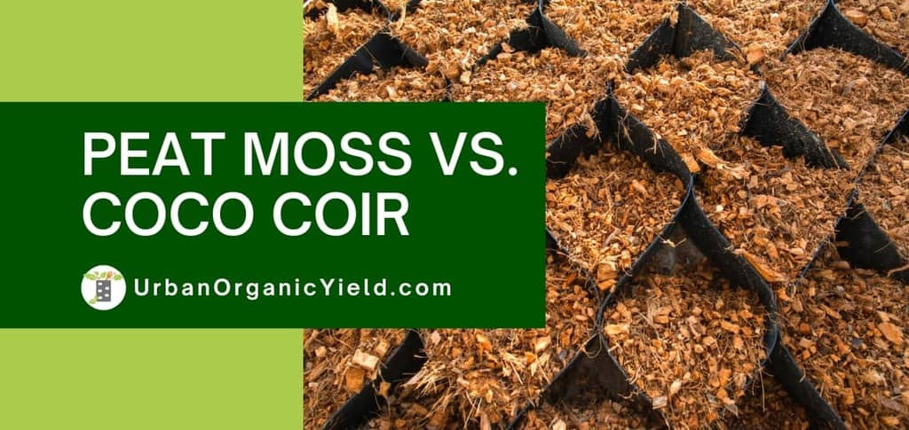 peat-moss-vs-coco-coir