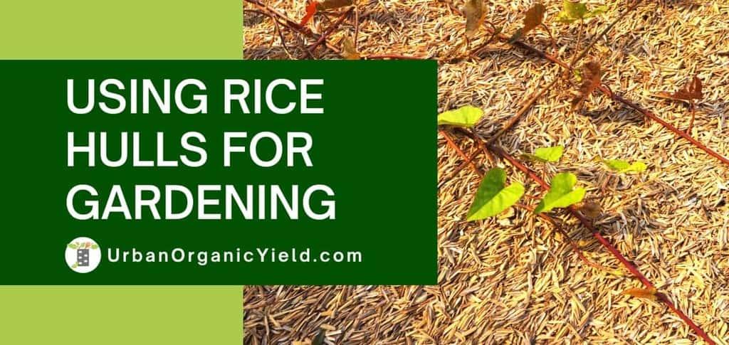 using-rice-hulls-for-gardening