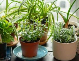12 Best Indoor Herb Garden Planters To Grow A Kitchen Herb Garden