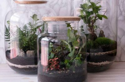 15 Closed Terrarium Plants That Will Thrive In High Humidity