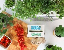4 Best Indoor Aquaponics Kits To Grow Vegetables & Fish Together