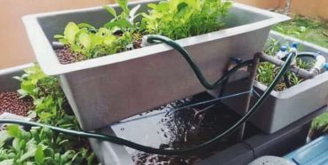 How To Build A Cheap DIY Backyard Aquaponics System!