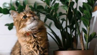 Is The ZZ Plant Poisonous To Cats, Dogs Or Children