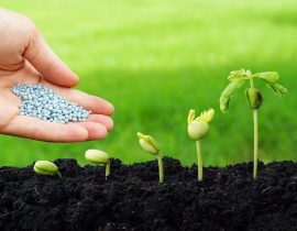 Liquid Lawn Fertilizer Vs Granular: What's The Difference & Which Is Better?