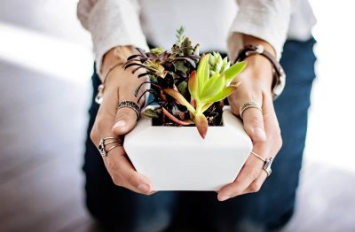 Succulent Subscriptions: How Does It Work? Image